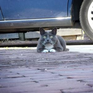 Kat bij auto
