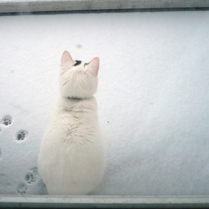 Lebbis op balkon in sneeuw