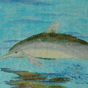 Reina de Boer dolfijn